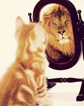 leul-si-pisica-in-oglinda