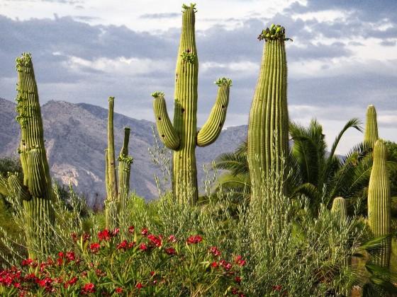 desert-cactus-hd-538567