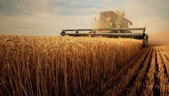 agricultura-angajati_3359 (1)