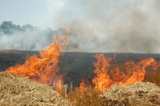 incendiu-jegalia-5